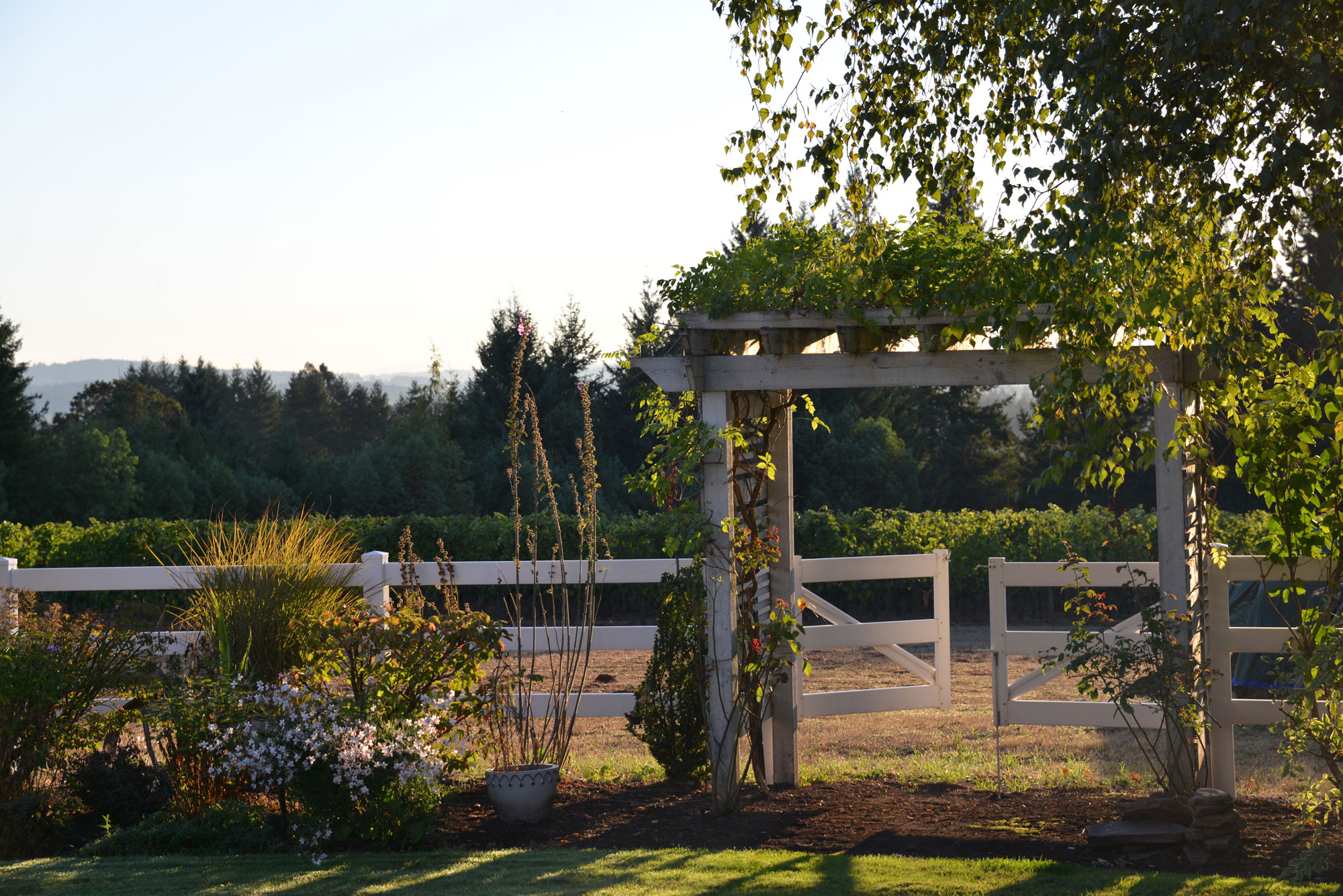 White arbor with white fence and flowers