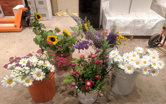 Buckets of daises, sunflowers, purple flowers, pink flowers